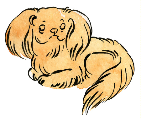 sorrowful: Vector color sketch Sable Pekingese dog (Lion-Dog, Pekingese Lion-Dog, Pelchie Dog, or Peke)
