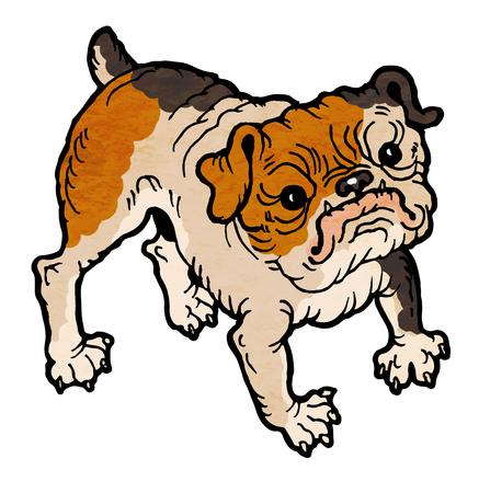 brindle: cute brindle bulldog vector illustration