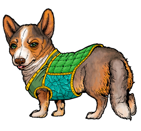 waistcoat: serious corgi wearing a waistcoat.  From a series of images of funny dogs.