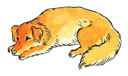 yorkshire: Cute dog - hand drawing vector illustration Illustration