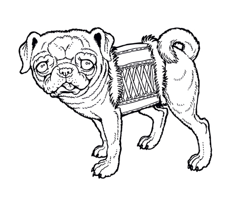 pug nose: little pug in a corset.  From a series of images of funny dogs.