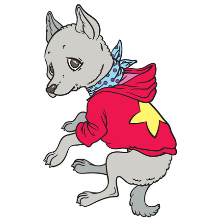 chihuahua: chihuahua in hoodies - hand drawing vector Illustration