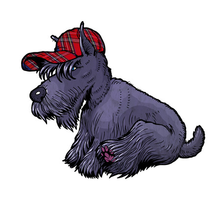 scottish terrier: Scottish terrier in cap. From a series of images of funny dogs. Illustration