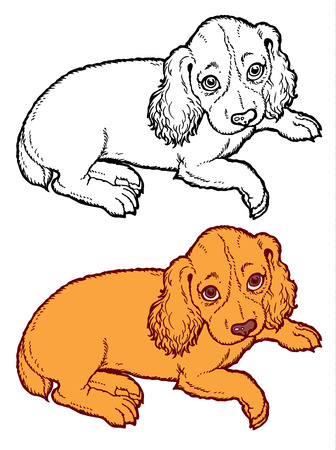 cavalier king charles spaniel: spaniel puppy dog - hand drawing vector