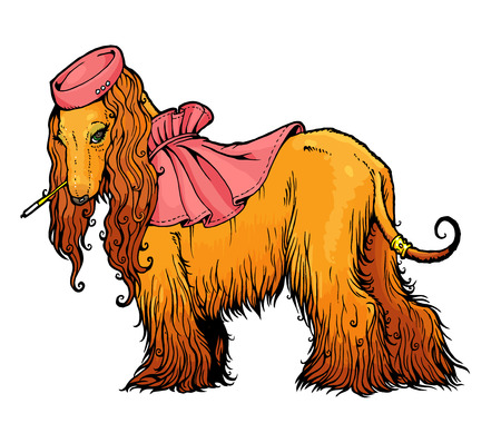 vector drawing Afghan Hound in elegant hat and cape.  From a series of images of funny dogs.