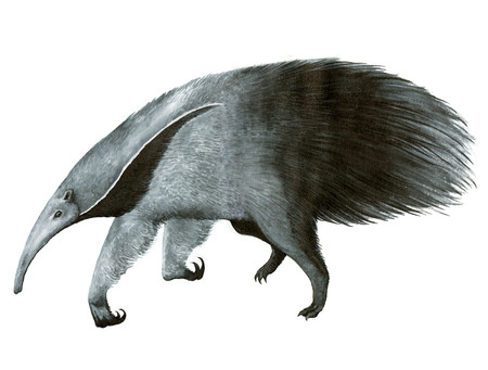 insectivorous: giant anteater or ant bear ink hand-drawing illustration