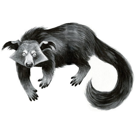 bearcat: binturong or bearcat - ink hand-drawing illustration Stock Photo