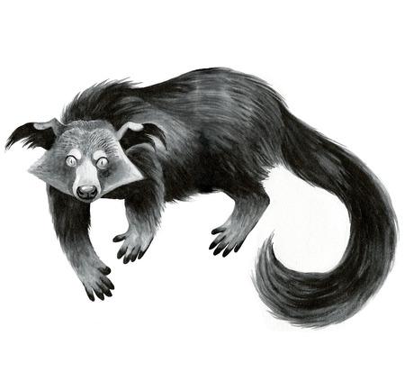 bearcat: binturong or bearcat - ink hand-drawing illustration Stock Photo