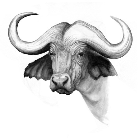 ink hand-drawing illustration water buffalo head Stock Photo