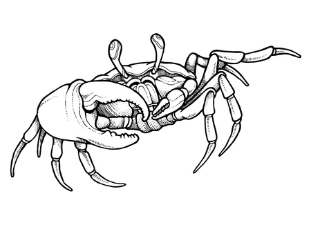 Hand drawn line art crab - vector illustration