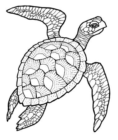 tortuga de mar - Dibujo de la línea de arte vector estilizada Ilustración de vector