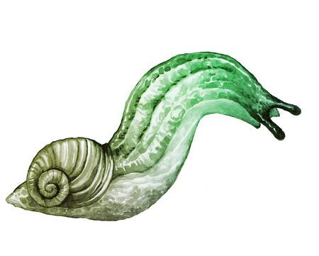mollusc: Slug picture - semi-slug or semislug - hand drawing watercolor art Stock Photo