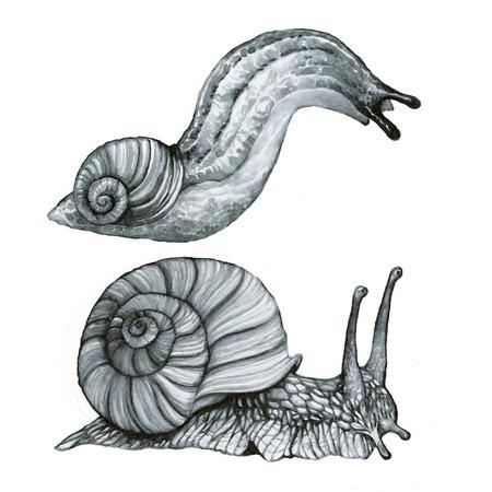 slug: Snail and Slug or semi-slug - Set hand-drawing watercolor