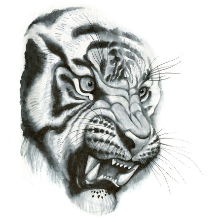 bared: Tiger head portrait - roaring tiger fangs bared - - hand drawing detailed illustration