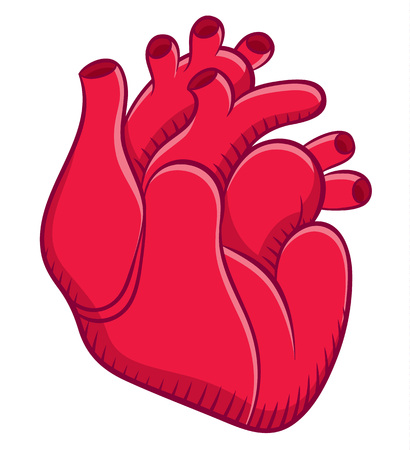 naturalistic: Naturalistic real heart. Vector illustration Illustration