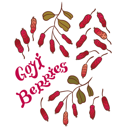 immature: Superfood goji berries - vector illustration of fresh Goji Berries (Wolfberries) with leaves on white background