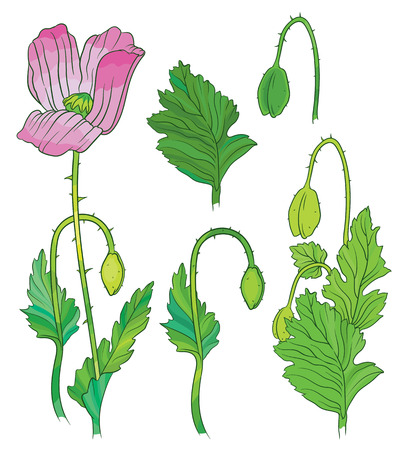 uncultivated: poppies flowers and buds - colorful vector art