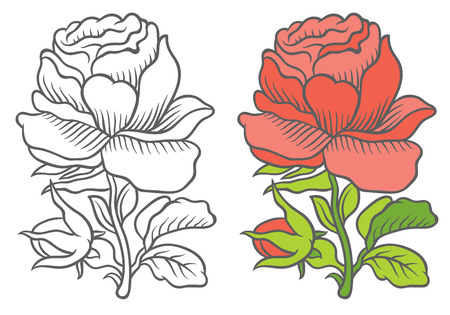 english rose: graphic and colorful botanical flower in vintage style - blooming english rose with bud - vector illustration for floral card and invitation