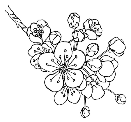 line drawing: Hand drawing apple tree branch in blossom line art isolated on a white  - vector illustration