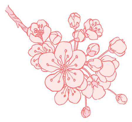 apple blossom: Hand drawing apple tree branch in blossom line art isolated on a white  - vector illustration