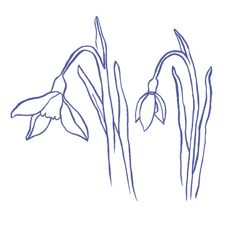 snowdrops: Snowdrops spring bouquet. Hand-drawn vector illustration Illustration