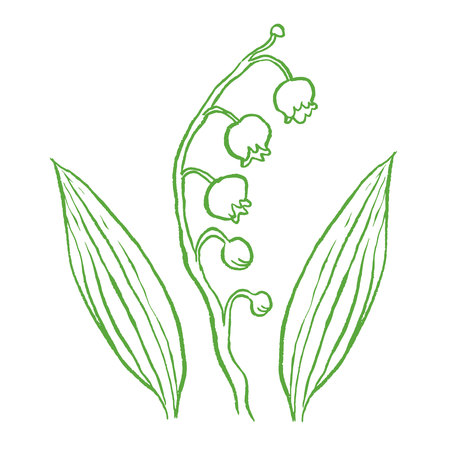 lily of the valley: lily of the valley hand drawing vector illustration