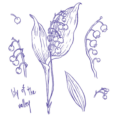 fragrant bouquet: lily of the valley - hand drawing vector illustrations set