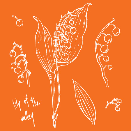 lily of the valley: lily of the valley - hand drawing vector illustrations set