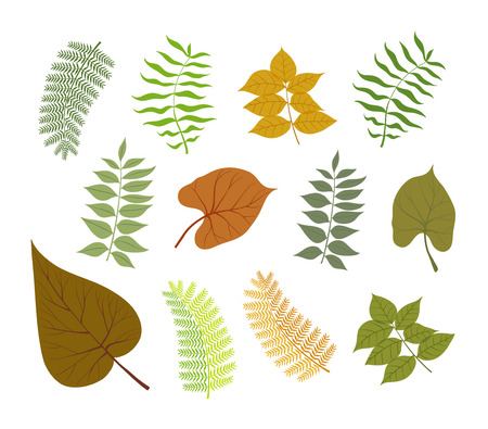 plant delicate: Different types of plant leaves delicate color vector