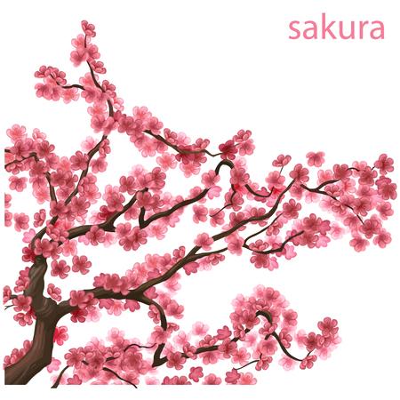 arbol de cerezo: ramas en flor rosa de sakura