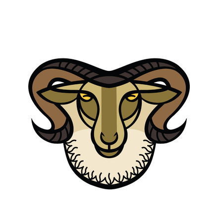 Color stylized drawing head of horned mountain ram