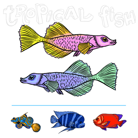 freshwater fish: Bright tropical sea fish - vector hand drawing isolated linear illustration in sketch style Illustration