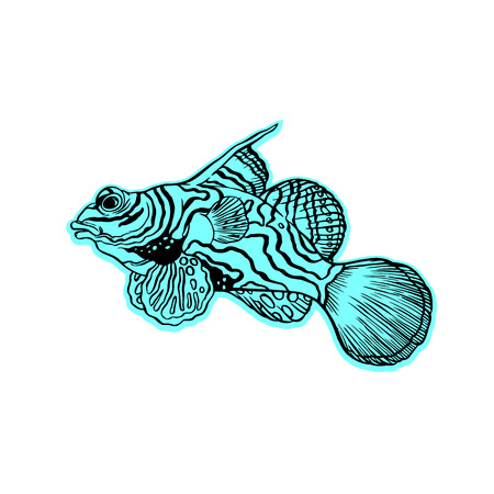 freshwater aquarium fish: Bright tropical sea fish - vector hand drawing isolated linear illustration in sketch style Illustration