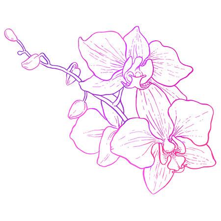 手描きの蘭の支店 - ベクトル ライン アート  イラスト・ベクター素材