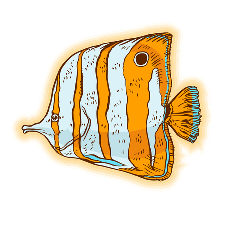 Bright tropical sea fish - vector hand drawing isolated linear illustration in sketch style Ilustrace