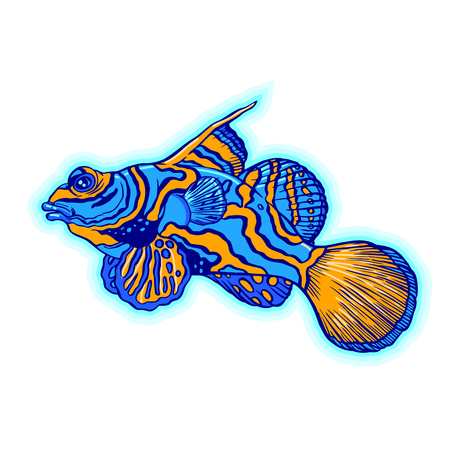 Bright tropical sea fish - vector hand drawing isolated linear illustration in sketch style Stock Vector - 90949796