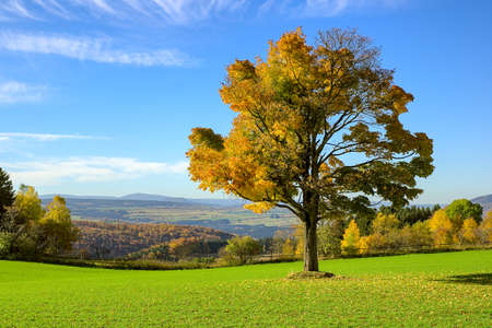 Single autumn tree on a meadow with blue colored mountain background at ore mountains germany Standard-Bild