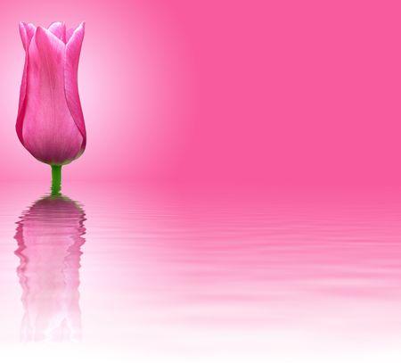 Pink flower on pink background