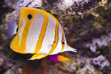 Beautiful sea fish on atoll photo