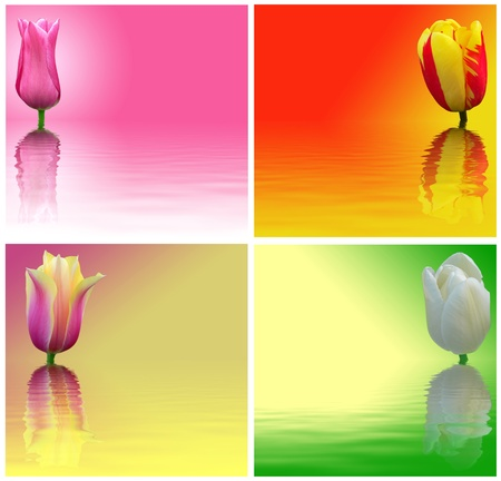 Red, yellow, white and pink tulips on a colored background. Abstract image flowers with reflection on water. photo