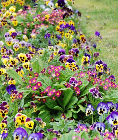 Garden of Violet flowers                 Stock Photo - 2231105
