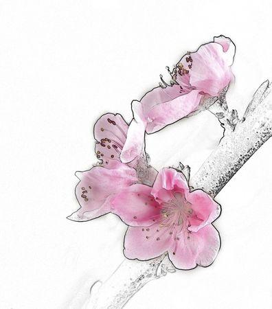 Blossoms Illustration. Stock Photo