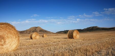 Field of hey bales