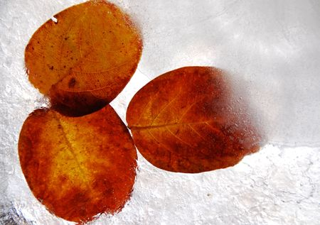 Detail of frozen autumn leaves with various colors and textures. Stock Photo - 2349832