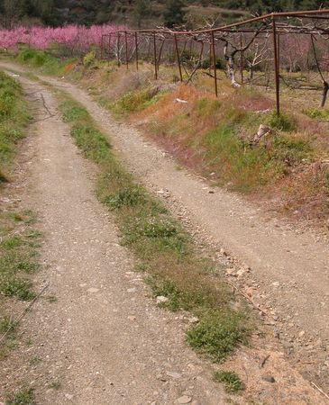 Off road with apple trees at the side. Stock Photo - 2374134