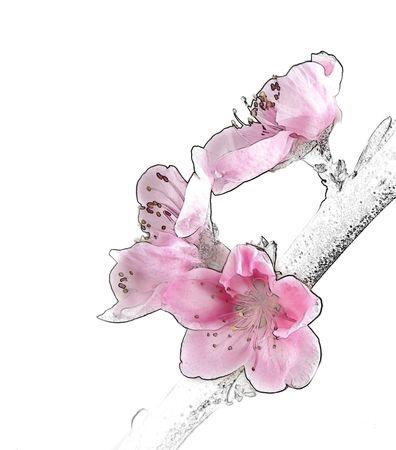 Blossoms Illustration. Stock Illustration - 2412588