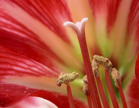 Dahlia Flower . Macro shot Stock Photo - 2435421