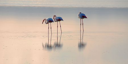 Flamingos in a lake late in the evening                Stock Photo