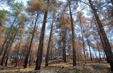 fro:           Remains of a forest fire fro a recent fire im Cyprus                           Stock Photo