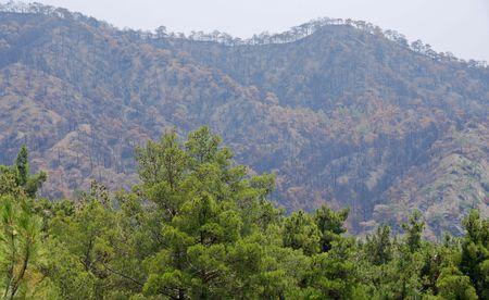forest fire: Restos de un fuego del bosque (mountan en el fondo) de un fuego reciente im Chipre